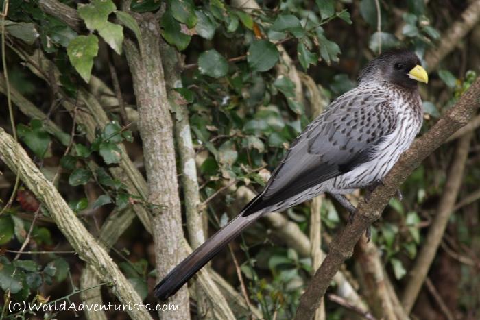 birdsinafrica1
