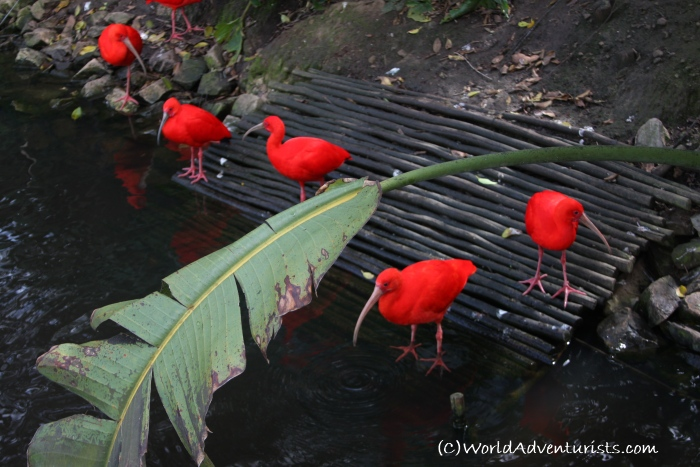 birdsinafrica11