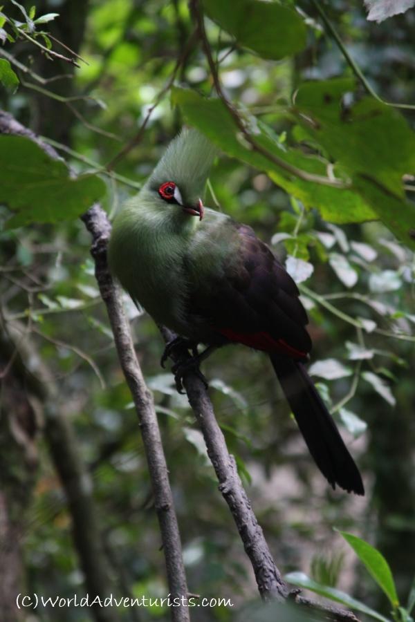 birdsinafrica2