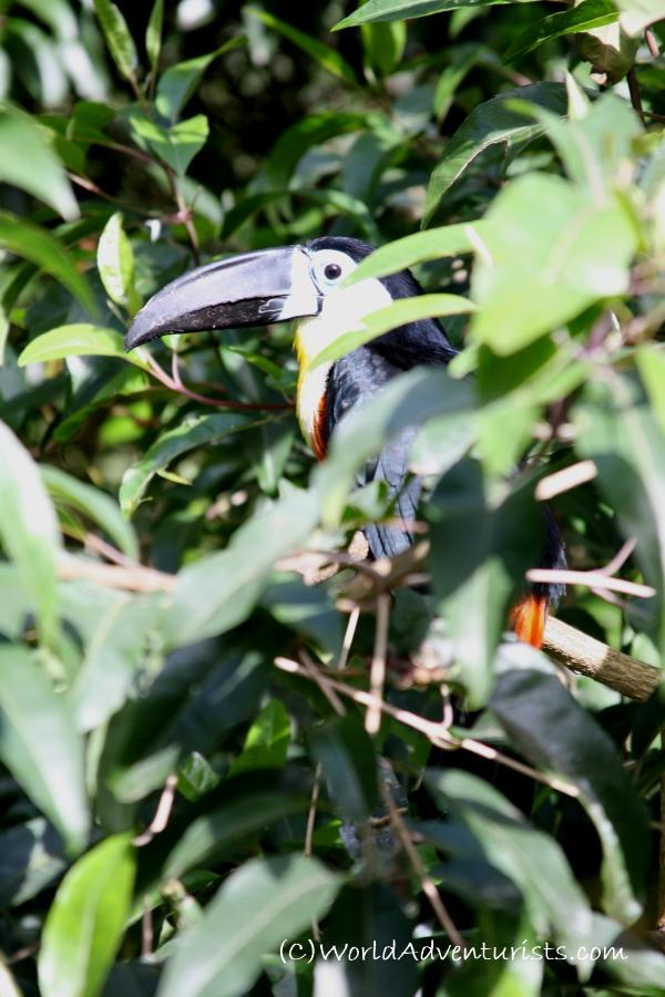 birdsinafrica4