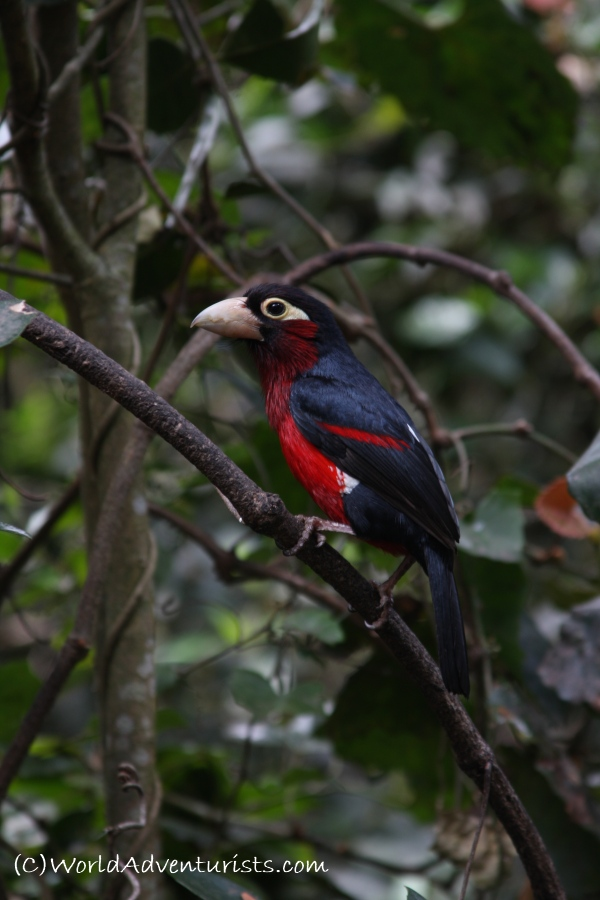 birdsinafrica5