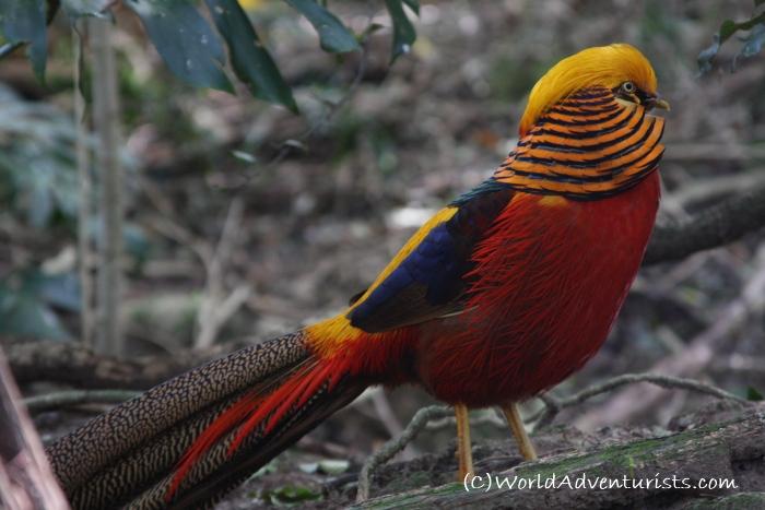 birdsinafrica8