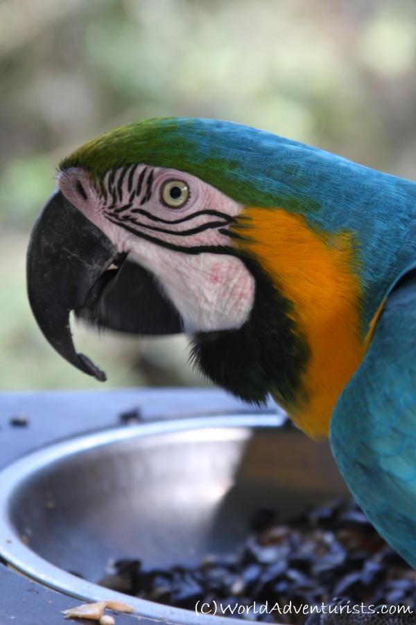 birdsinafrica9