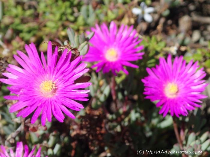 Summer Flowers Growing in a Church Garden: A Photo Essay