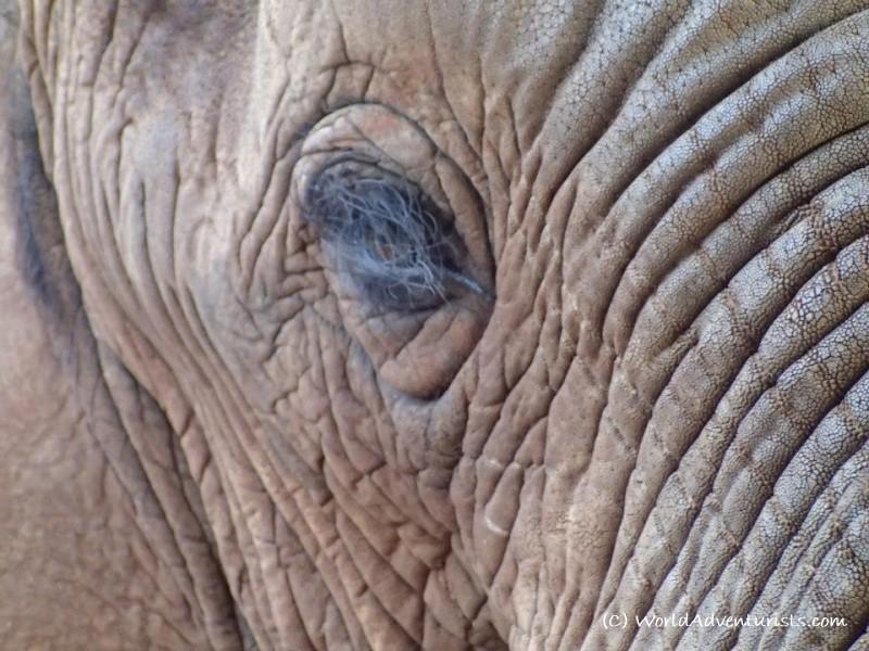 elephantSA