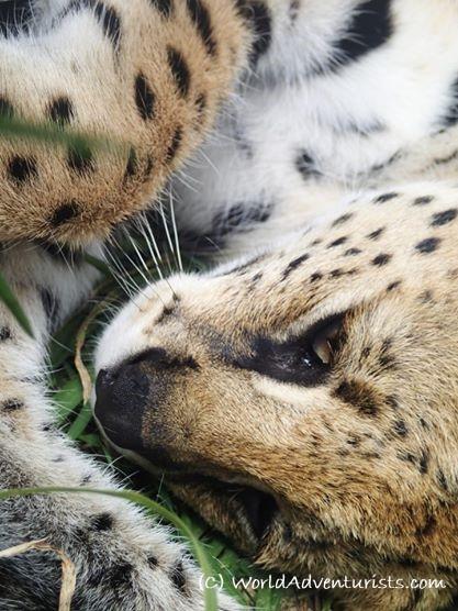 servalSA