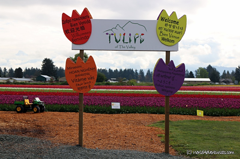 tulipsofthevalley20