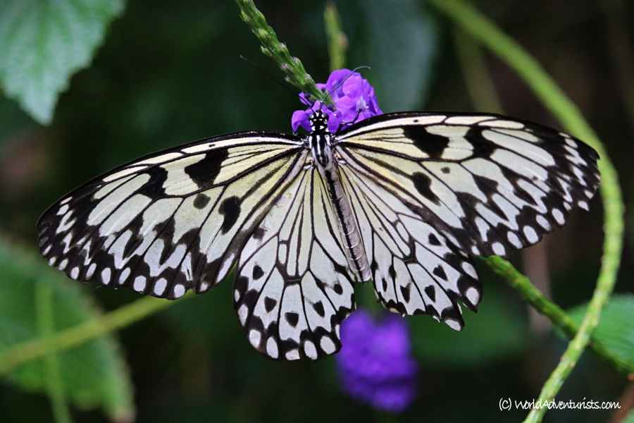 butterflygardens11
