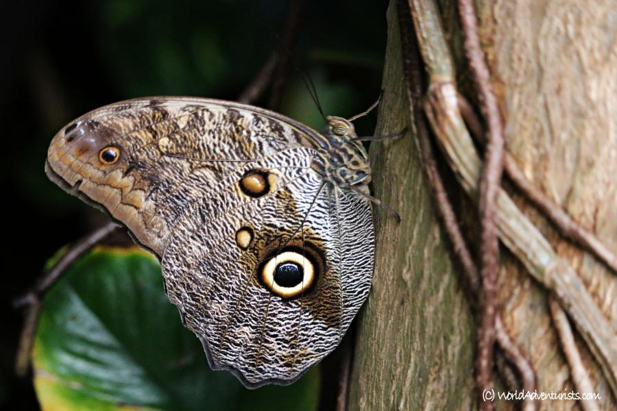 butterflygardens12