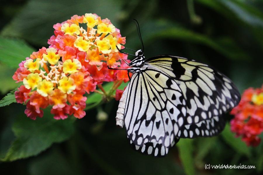 butterflygardens13
