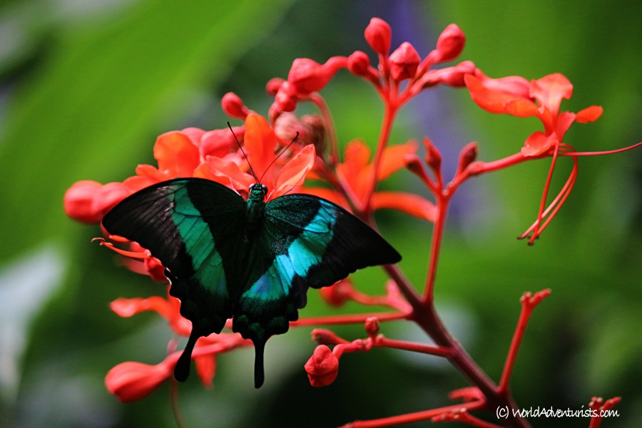 butterflygardens16