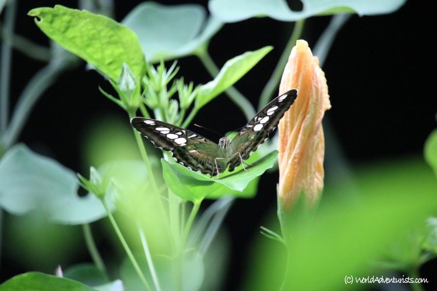 butterflygardens3