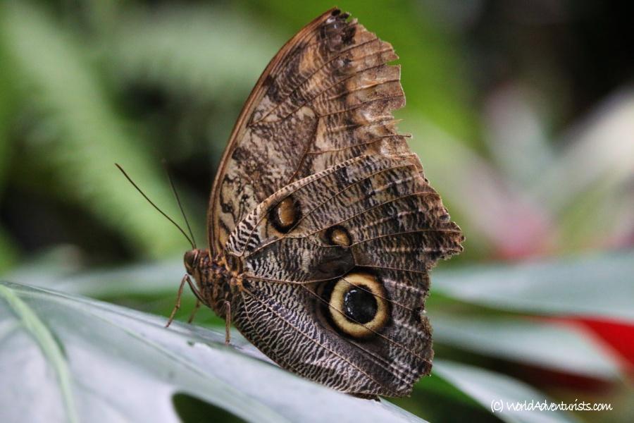 butterflygardens4