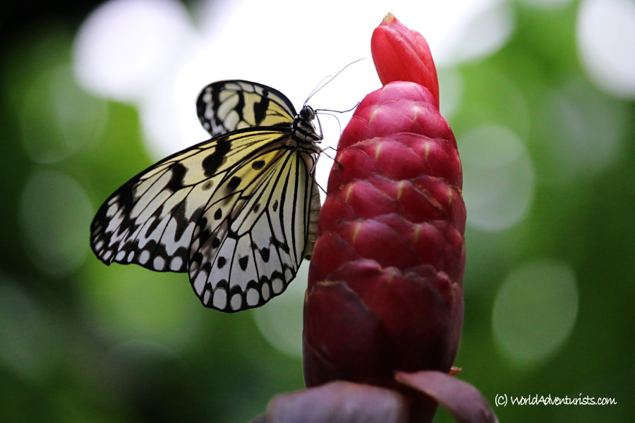 butterflygardens5
