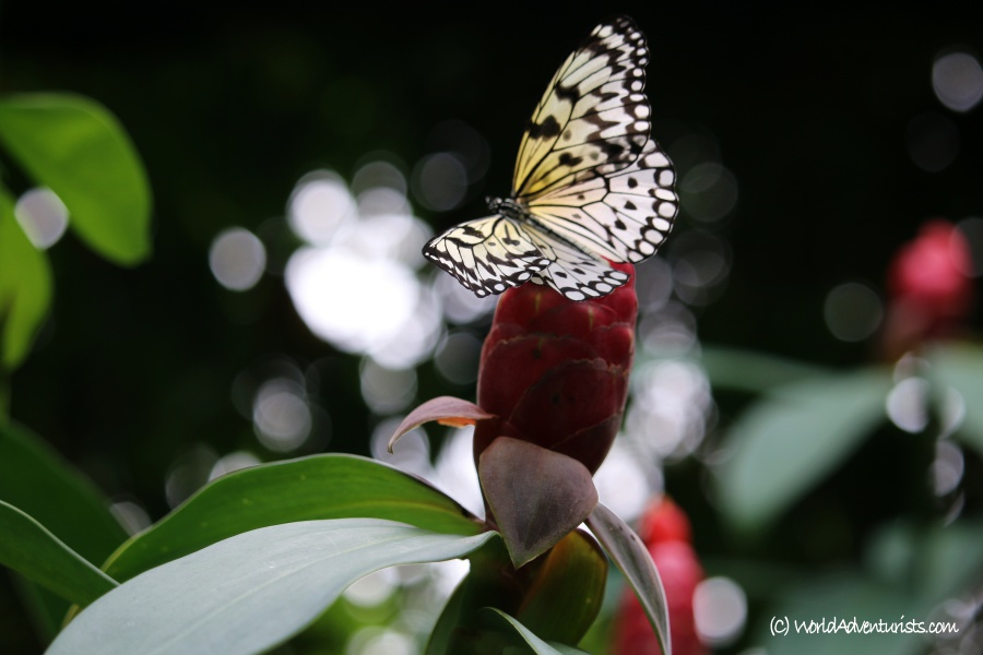 butterflygardens6