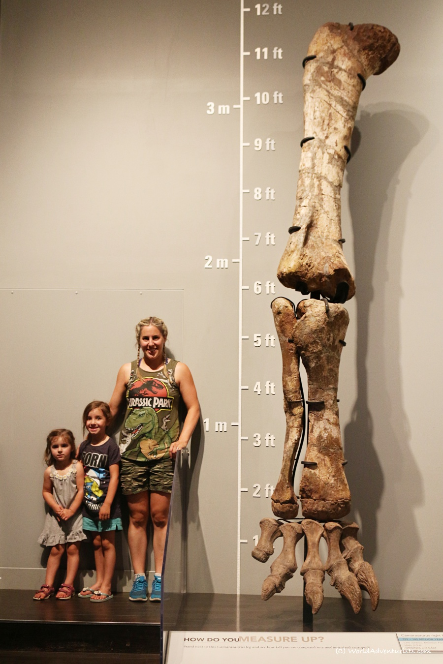 tyrrellmuseum012