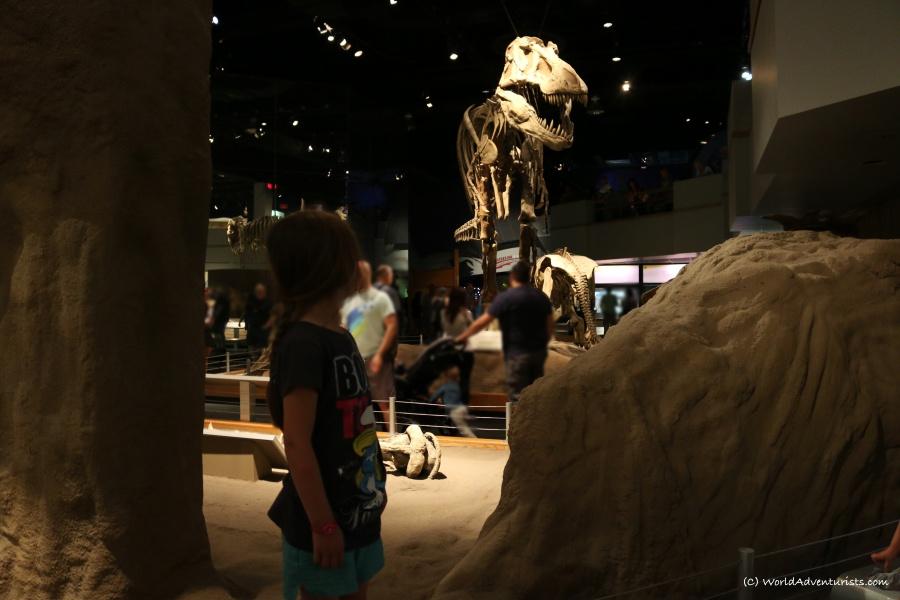 tyrrellmuseum014