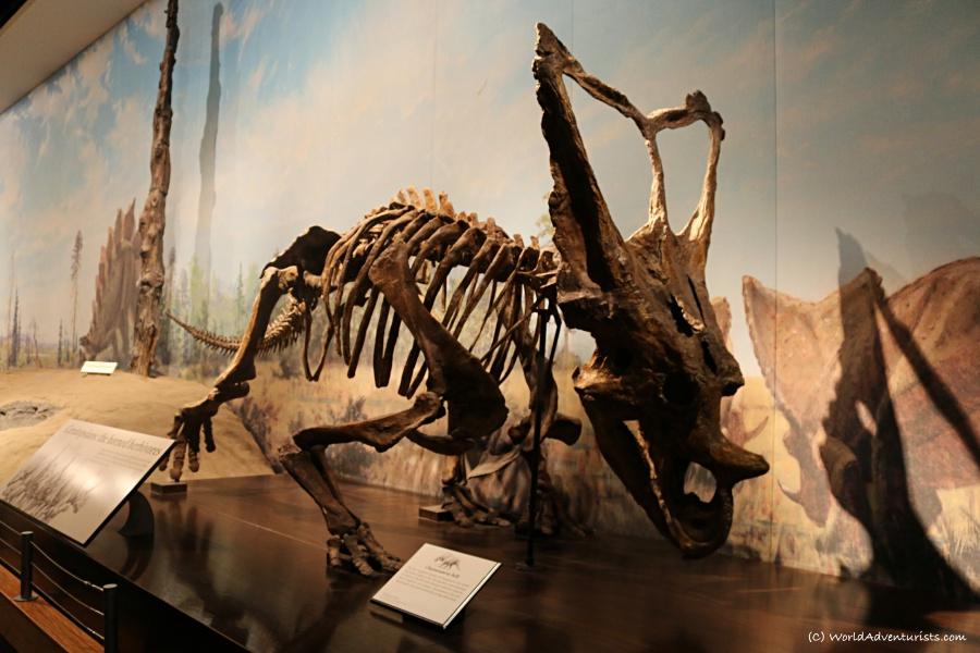tyrrellmuseum016