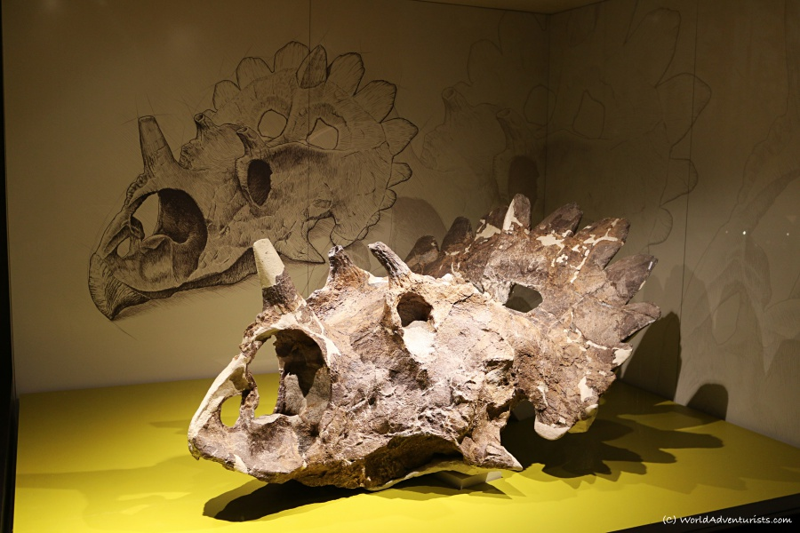 tyrrellmuseum017