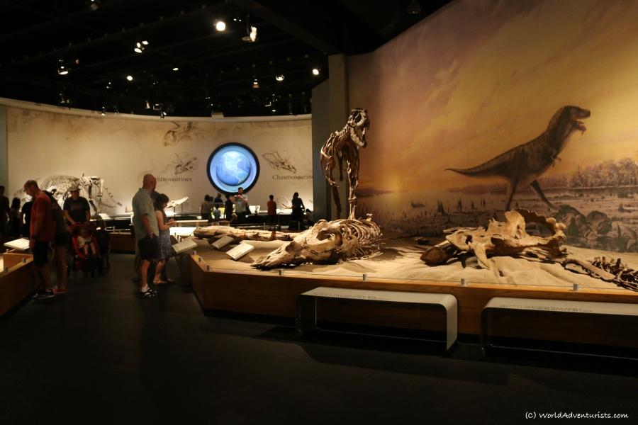 tyrrellmuseum018
