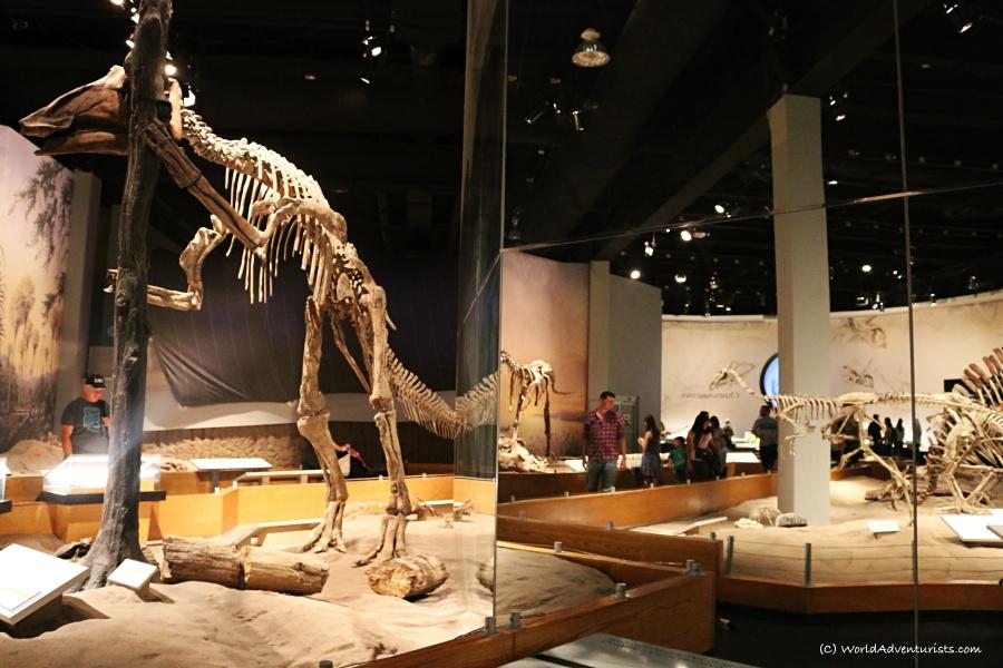tyrrellmuseum019
