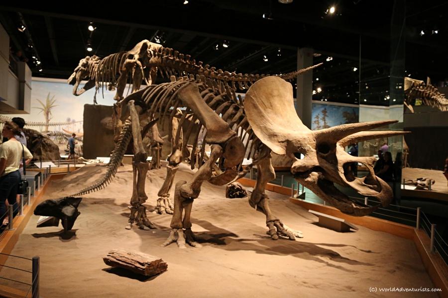 tyrrellmuseum021