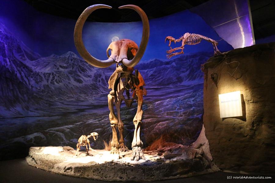 tyrrellmuseum022