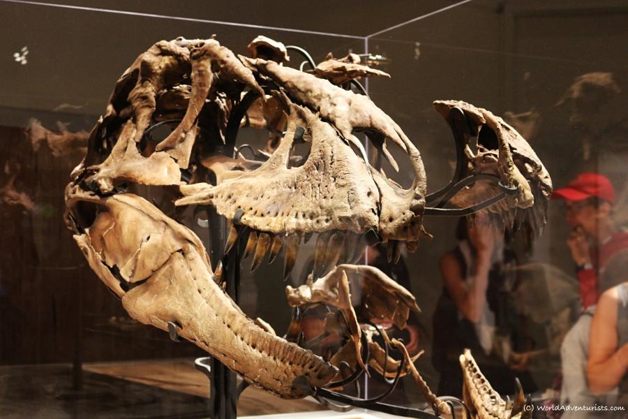 tyrrellmuseum04