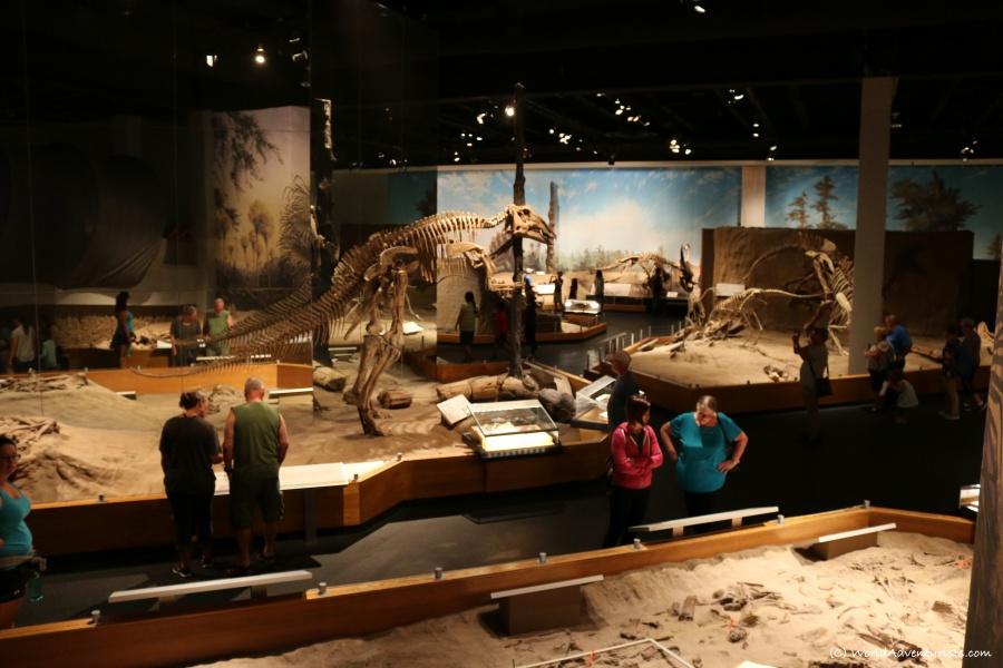 tyrrellmuseum07
