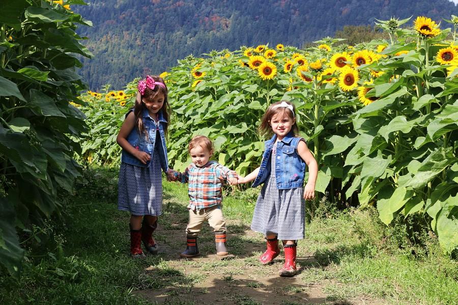 sunflowers08