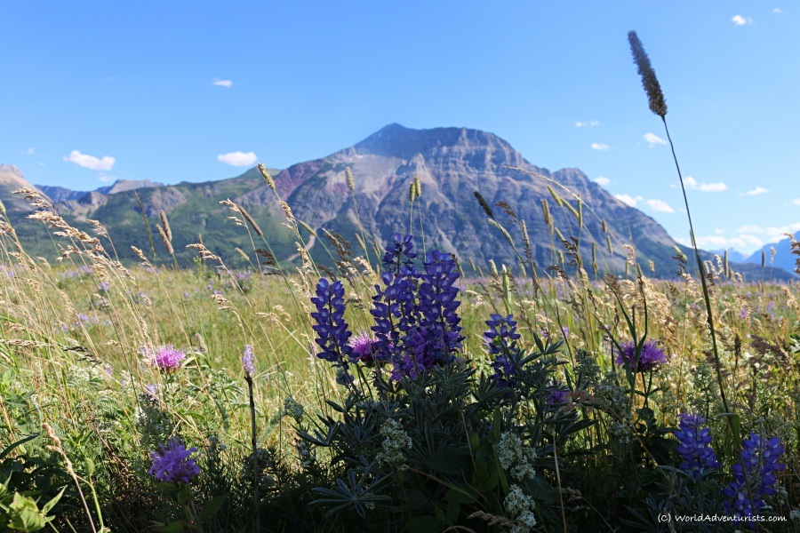 watertonnp14