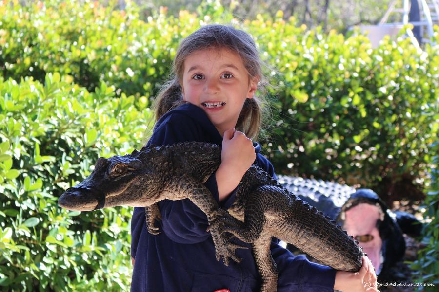 gators12