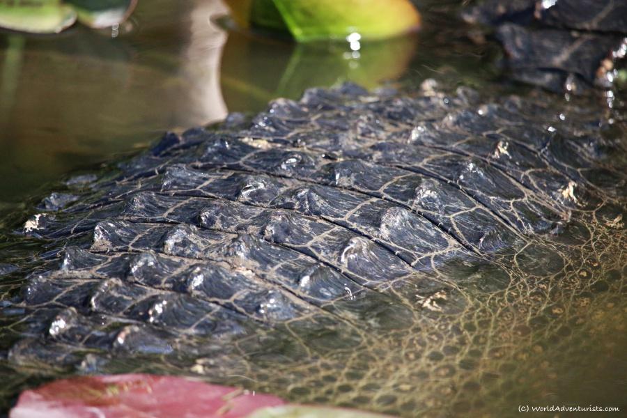 gators9