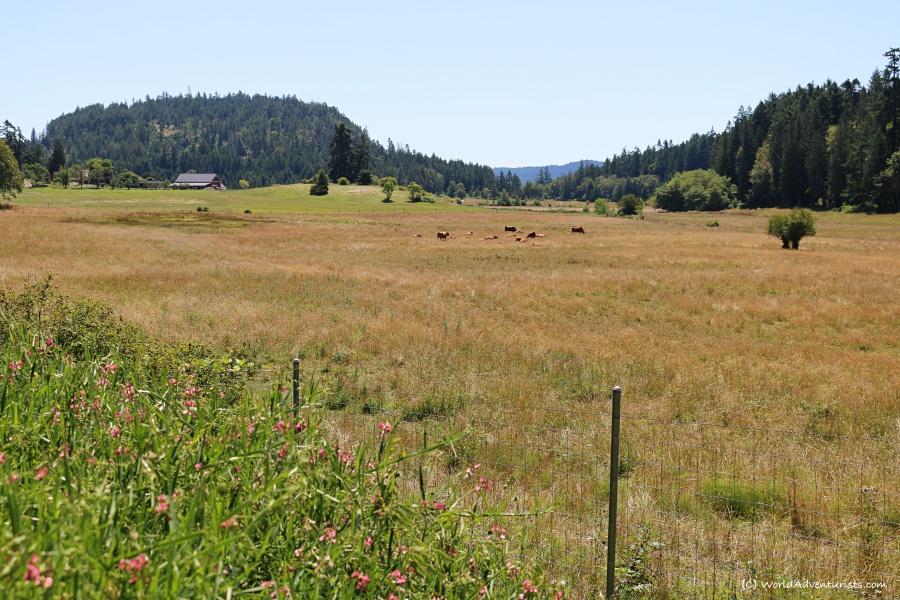 mayneislandfarm