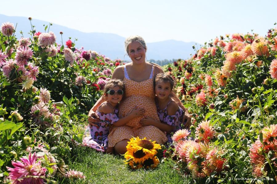 sunflowers62