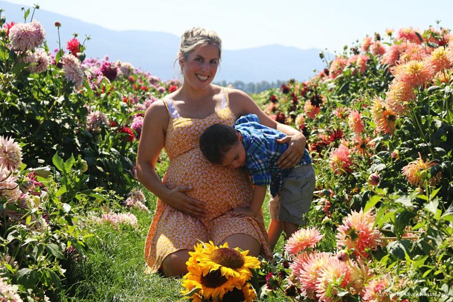 sunflowers64