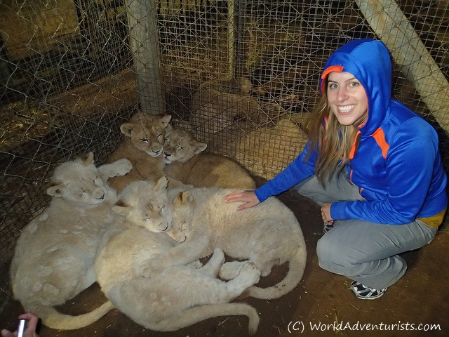Close Encounters at the Lion Park, Johannesburg | Emm in London