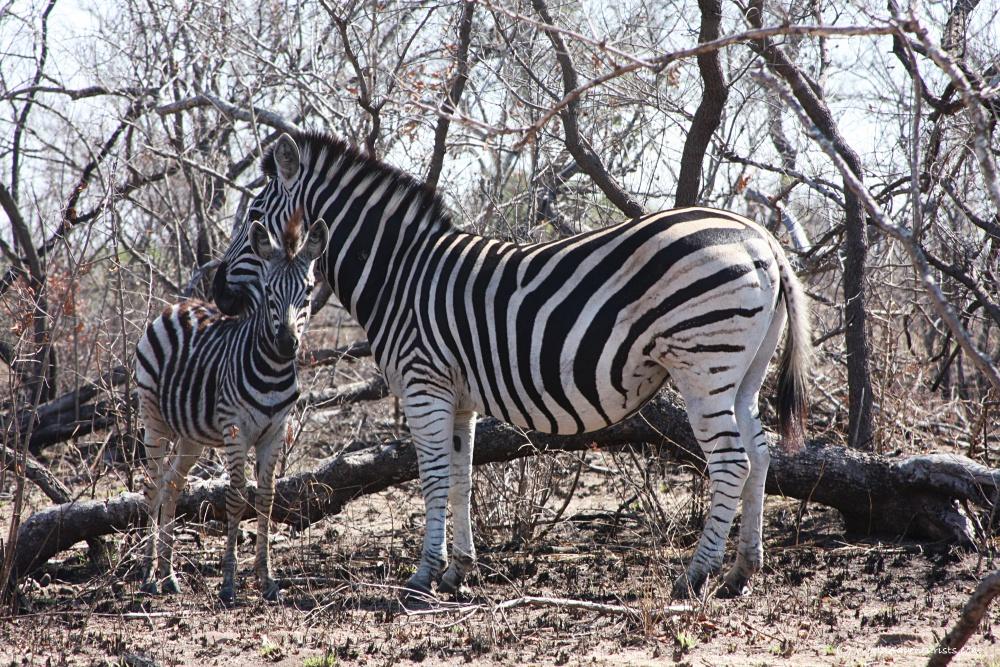 Safari Photography Tips