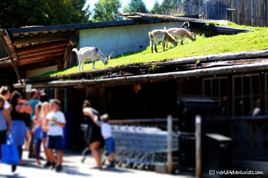 Coombs Old Country Market with Goats On The Roof