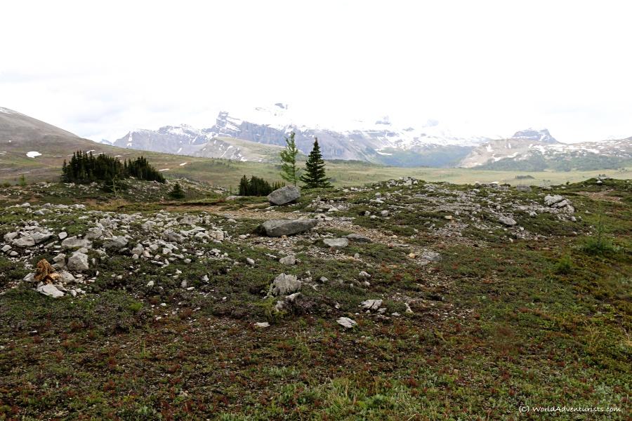 Sunshine Meadows In Banff