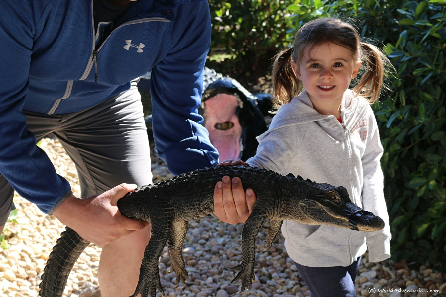 Holding a gator in Everglades National Park