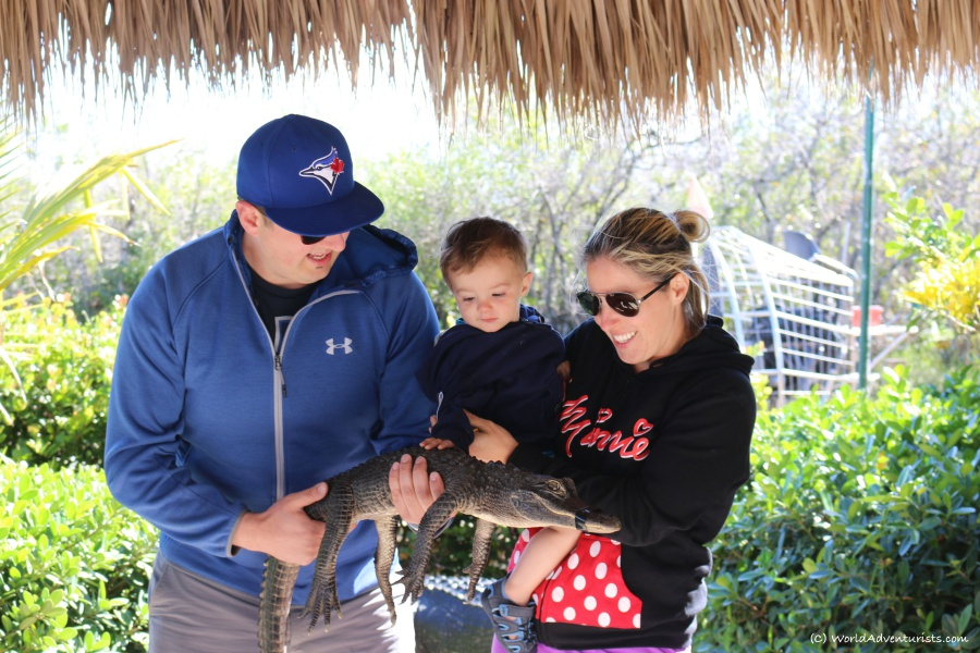 Holding a baby gator in Everglades National Park