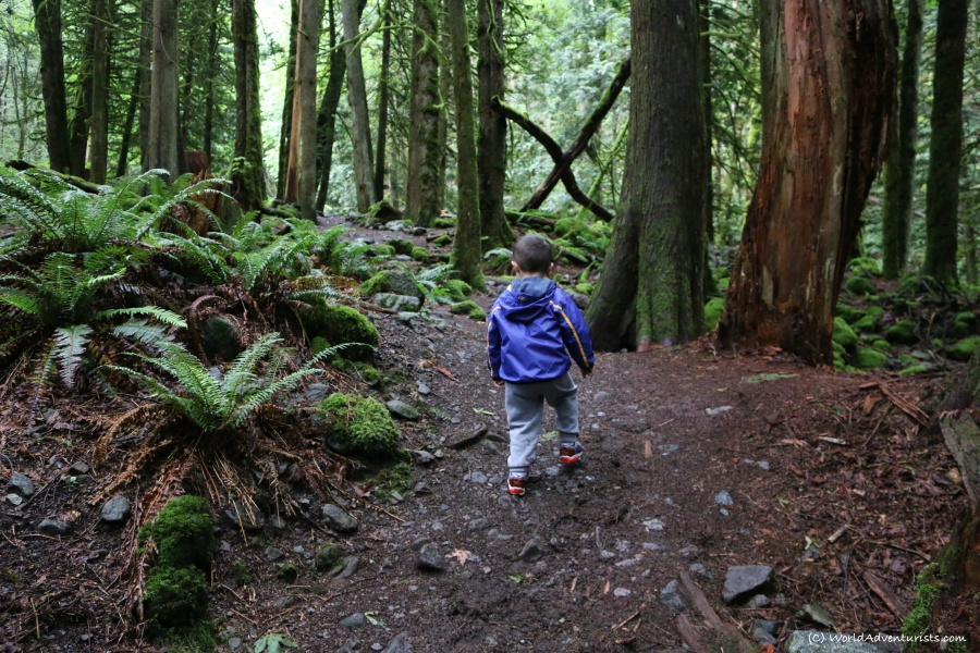 Little boy hiking to Flood Falls in Hope, BC