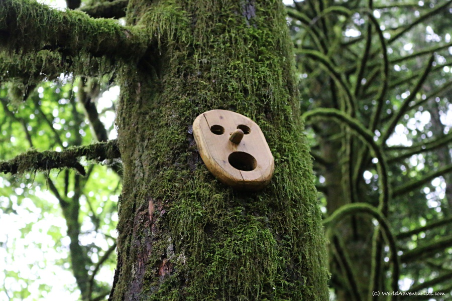 Wooden face nailed to a tree on the trail hiking to Flood Falls in Hope, BC
