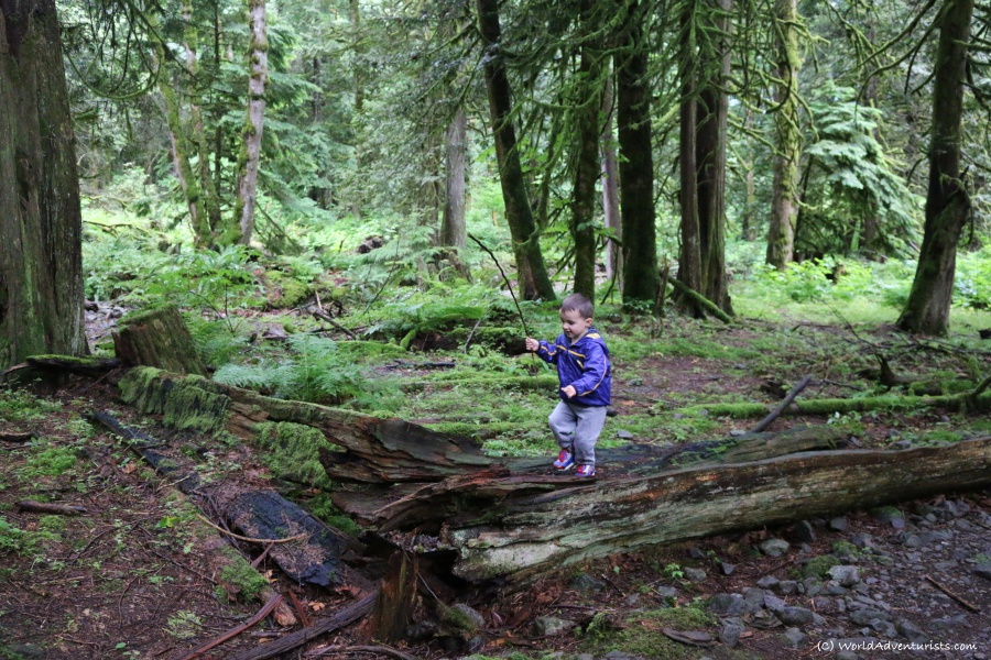 Little boy enjoying nature on the trail hiking to Flood Falls in Hope, BC
