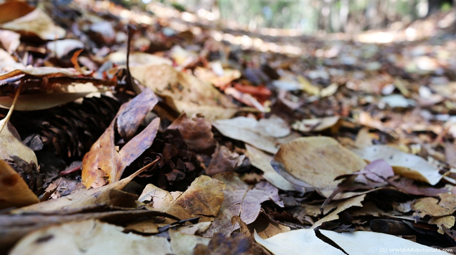 Fall leaves on Galiano Island