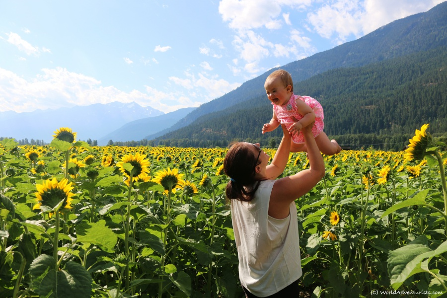 Happy baby and Mom in the Sunflowers and mountains at the Pemberton sunflower maze