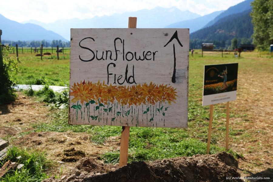 Pemberton sunflower maze sign