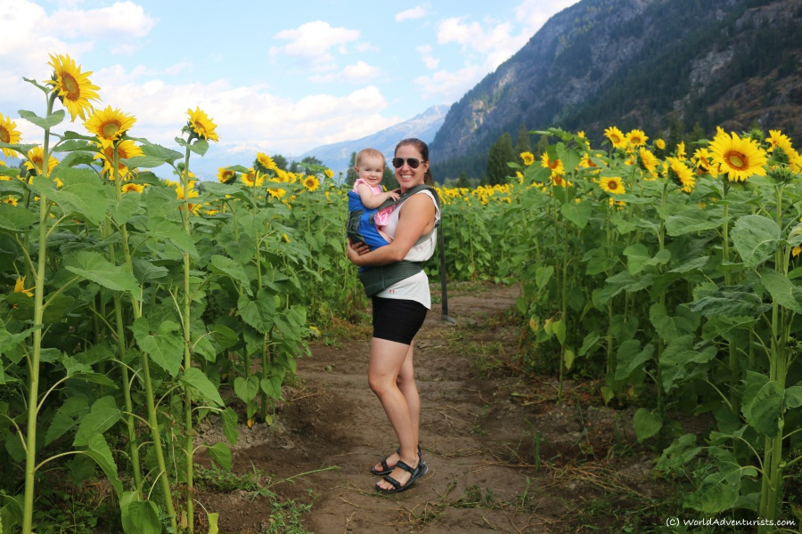 Baby and Mom in Sunflowers at the Pemberton sunflower maze