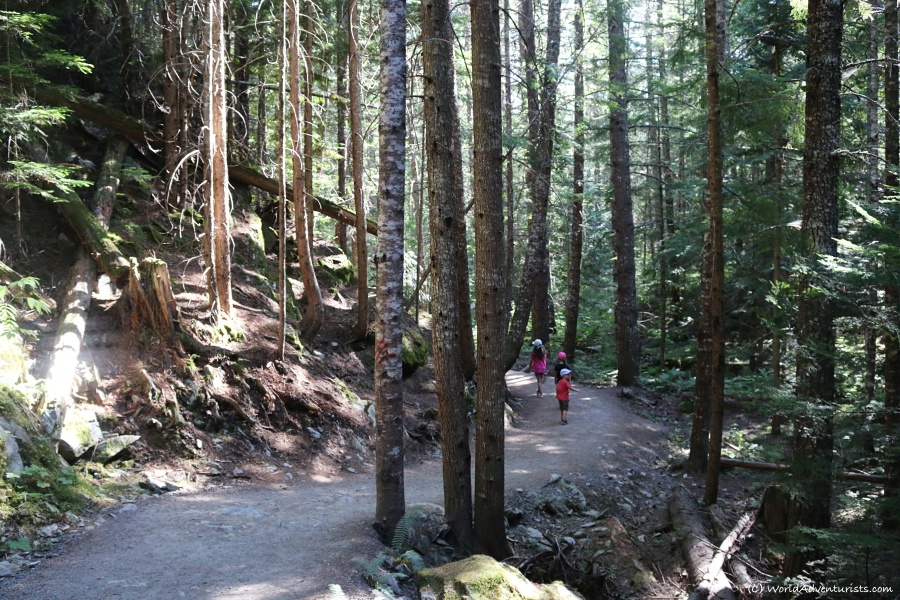 Forest trail to the Whistler Train Wreck
